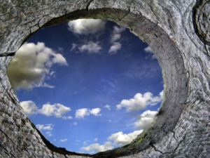 Through_A_Knothole