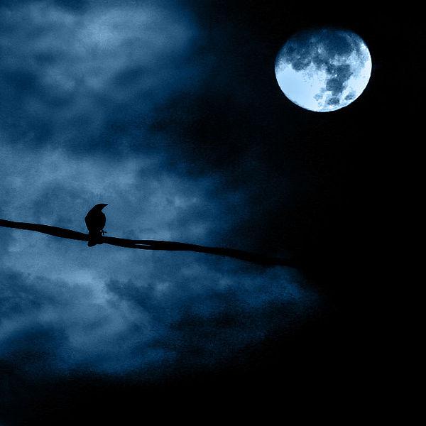 Full_moon_night-Luz-A.-Villa-Wikimedia